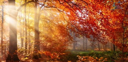Ihr Ritual für den Herbst – Loslassen